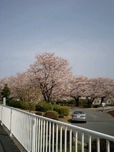 2007桜7