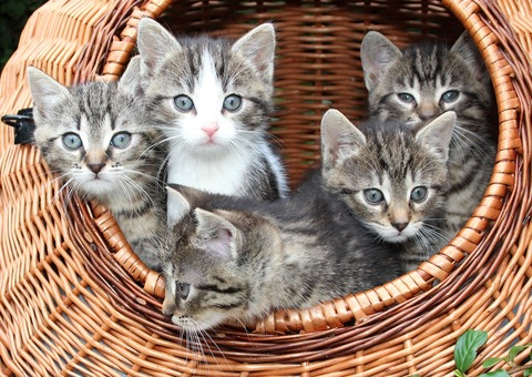 cat-1209743_1920