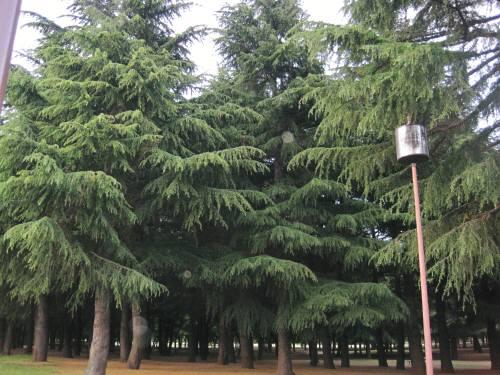 18野川公園