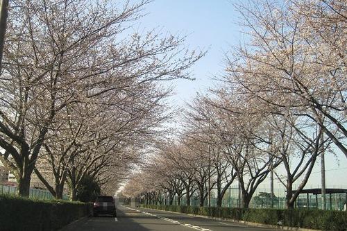 桜飛田給6