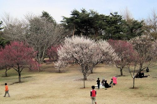 野川公園6