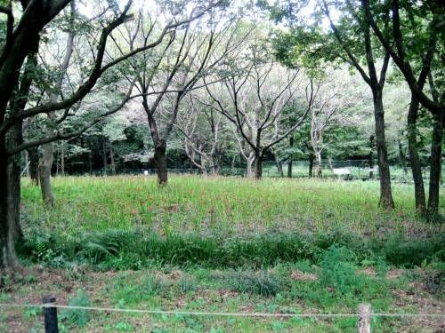 08野川3