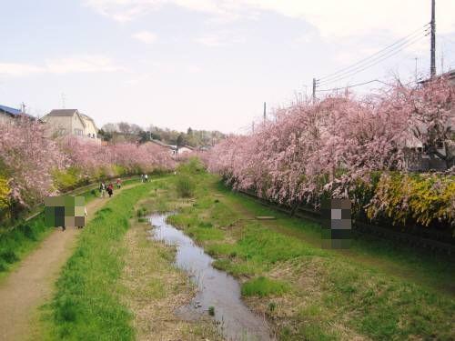 11野川2