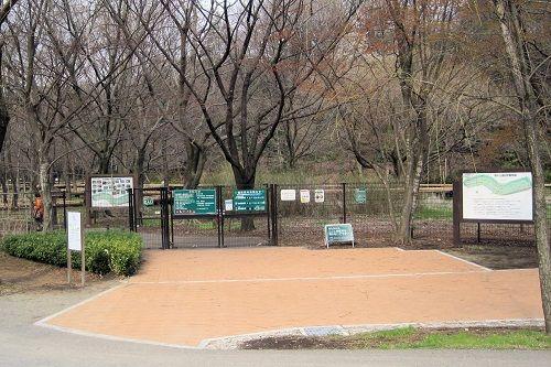 野川公園5