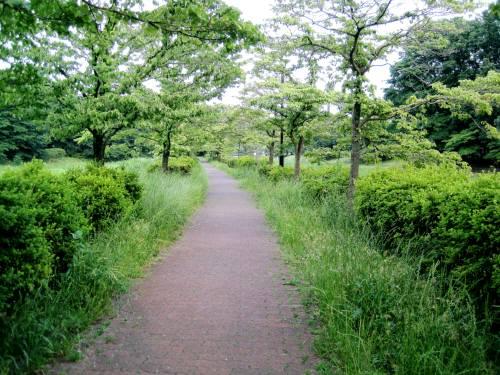 12武蔵野公園