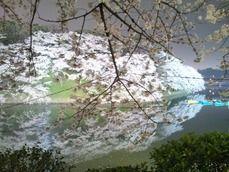 千鳥ヶ淵の夜桜