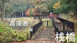 桟橋と菖蒲池