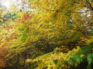 伊奈ケ湖の紅葉