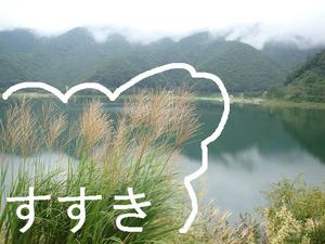 精進湖のすすき