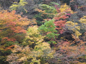 早川町湯島(西山地区)の紅葉
