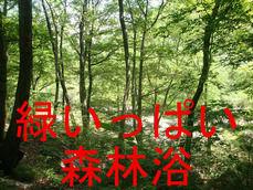緑がいっぱい森林浴