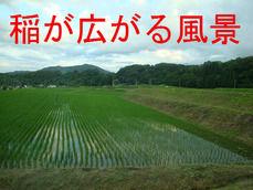稲が広がる風景