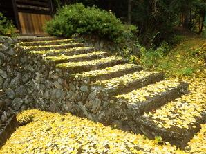 イチョウの階段