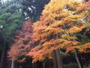 菖蒲池園地の紅葉