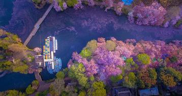 sakura-cherry-blossom-drone-photography-danilo-dungo-japan-3