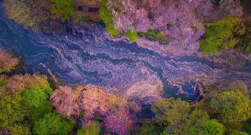 sakura-cherry-blossom-drone-photography-danilo-dungo-japan-2