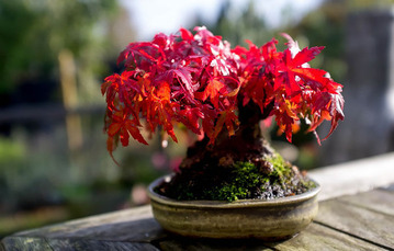 amazing-bonsai-trees-14-5710edd09573e__700