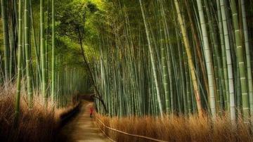 Sagano-Bamboo-Forest-Kyoto