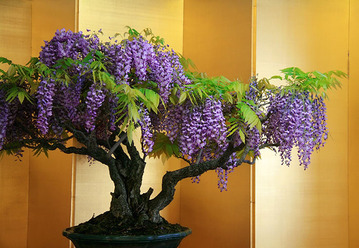 amazing-bonsai-trees-30-5710f9a93ef3d__700