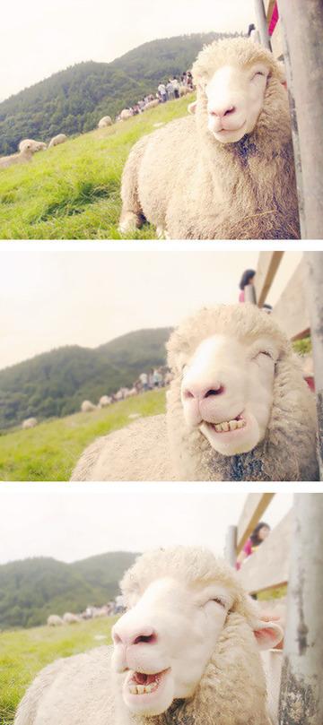 smiling-animals-22-570e0c392460d__605