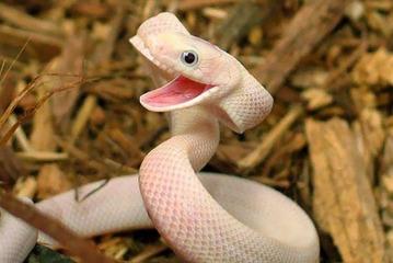 smiling-animals-41-570e0c6c1cc7a__605