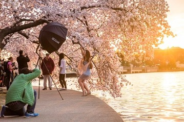 Cherry-Blossom-Festival-Photoshoot-1-650x433