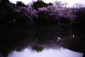 spring-japan-cherry-blossoms-national-geographics-201