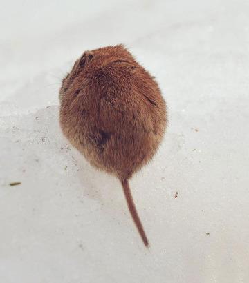 cute-animals-hokkaido-ezo-japan-33