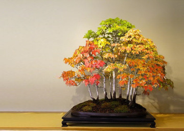 amazing-bonsai-trees-11-5710ecaba5024__700