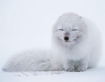 smiling-animals-30-570e0c4fed2ac__605