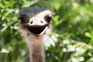 smiling-animals-25-570e0c41ee4c3__605