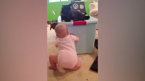 Baby and Cat Fun and Fails - Funny Baby Video 3-41 screenshot