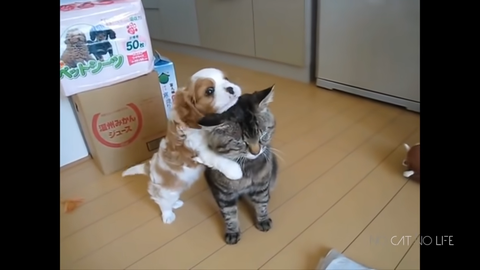 Funny Cats and Dogs Compilation 0-4 screenshot