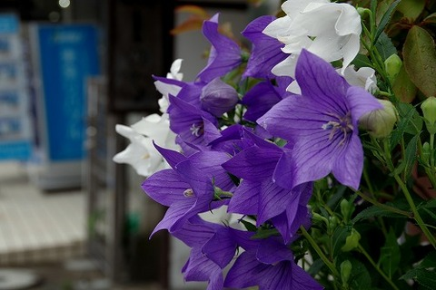 photo-2015-0704-0936-02