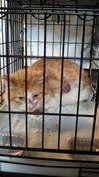 虐待猫 茶白2