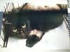2009春 黒