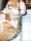 虐待猫 茶白?2