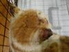 虐待猫 茶白?3