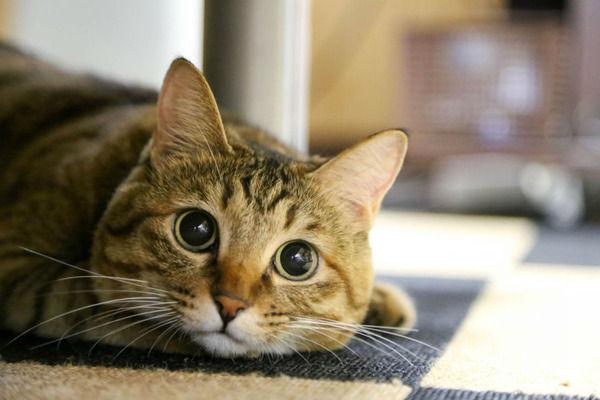 【こんなん泣く…】猫が死ぬ直前に「心を許した人」にだけ見せる行動がこちら…(´;ω;`)ウッ