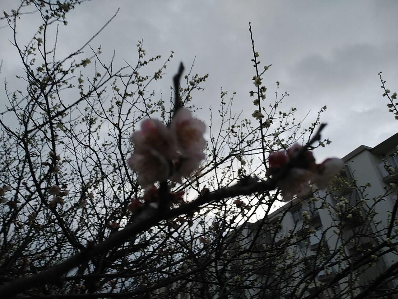 の 別名 梅 花