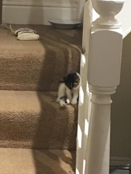 階段であそんでたら眠くなっちゃったよ。だから寝るよっ!