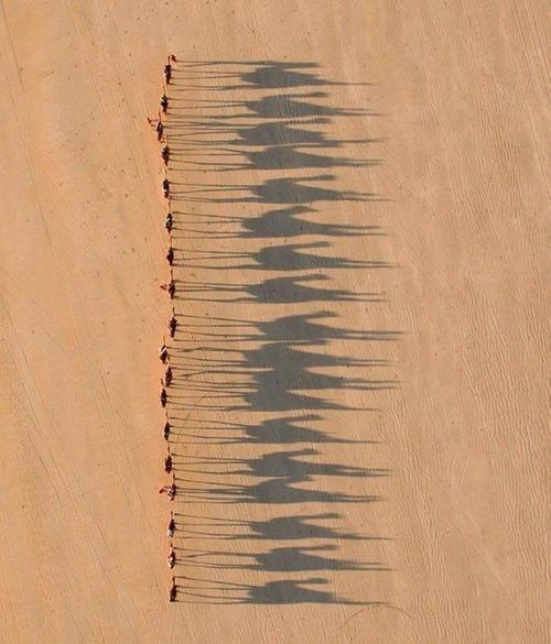ラクダの行列。なが~~~い。(カゲが