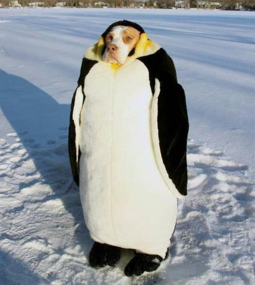 はいはい、ペンギンペンギン。これで満足?