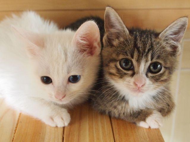 2匹の仲良し猫