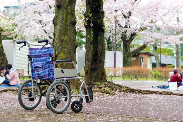 車イスと桜散策