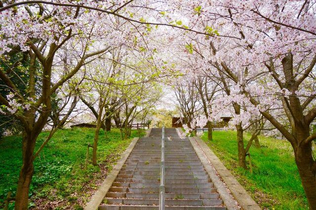 桜階段人生の壁