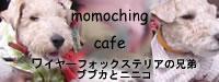 momoching cafe