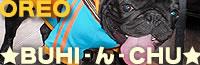 ☆BUHI-ん-CHU☆ フレンチブルドッグ☆OREO