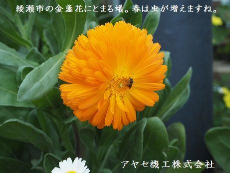 シャープ蚊取空清 虫 アヤセ機工 (1)