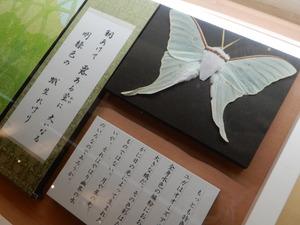 斉藤茂吉と昆虫のものがたり